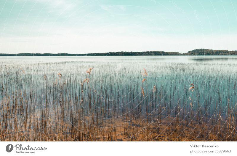 Schilf wächst im Frühling an einem Grundsee wachsend Park Stille Ebene Blauer Himmel federnd sonniger Tag ruhen Schöner Tag Schlaglicht Spaziergang Oberfläche