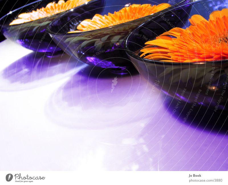 Blau.Gelb.Perspektiven Wasser Blume gelb Sonnenblume Schalen & Schüsseln