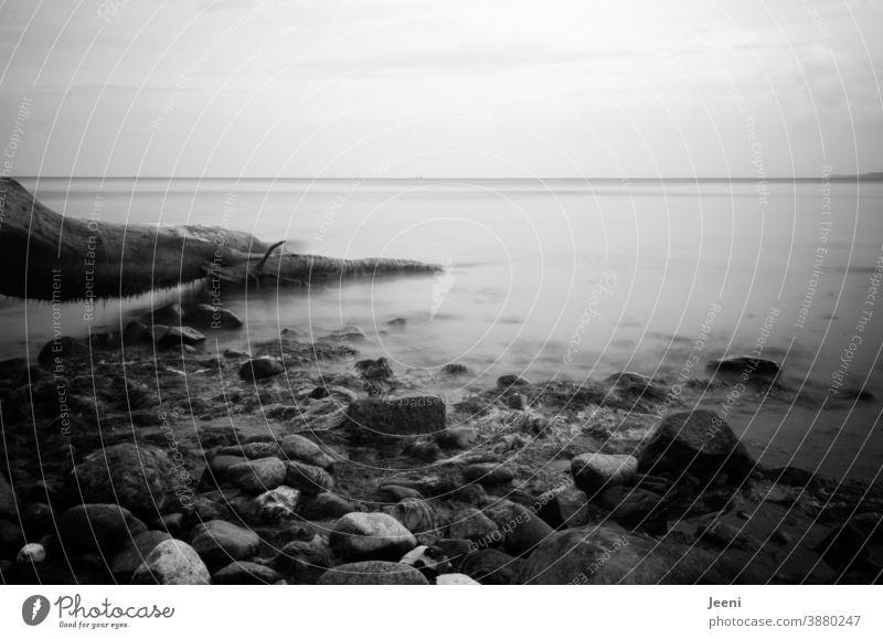 Am Meer liegt ein Baum am Strand und ragt in das Wasser hinein - Steine liegen am Ufer Ostsee Ostseeküste Küste Baumstamm Steilküste Steinstrand Nebel Neblmeer