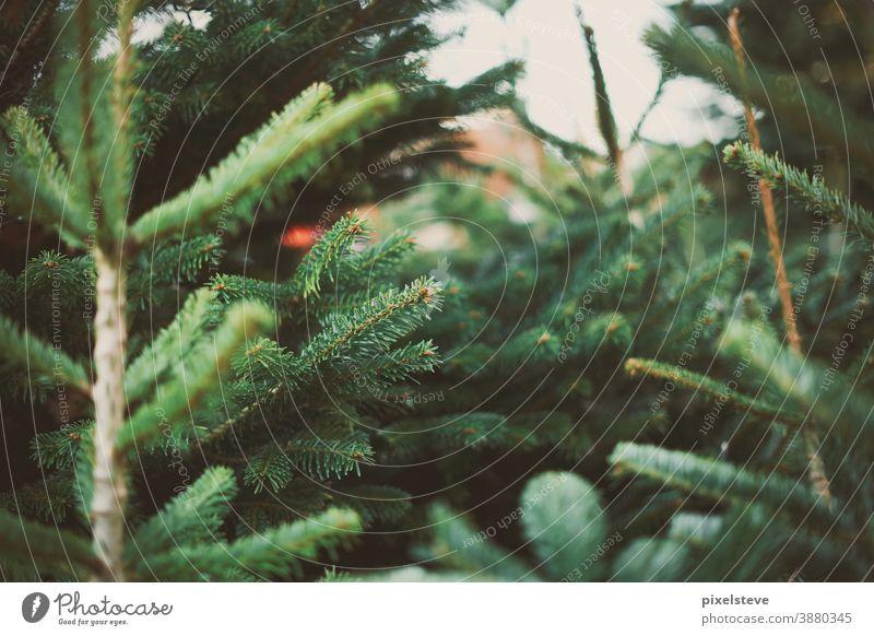 Christbaum mit Lichterkette Weihnachtsbaum Weihnachten Christkind adventszeit Lichterketten Heiligabend Baum Weihnachtsmann Weihnachtsgeschenk Adventskranz