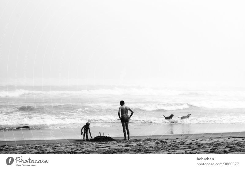 ein kind, ein mann, zwei hunde und eine sandburg Unschärfe Kontrast Licht Tag Außenaufnahme außergewöhnlich Schwimmen & Baden Südafrika knysna Meer Bucht Strand
