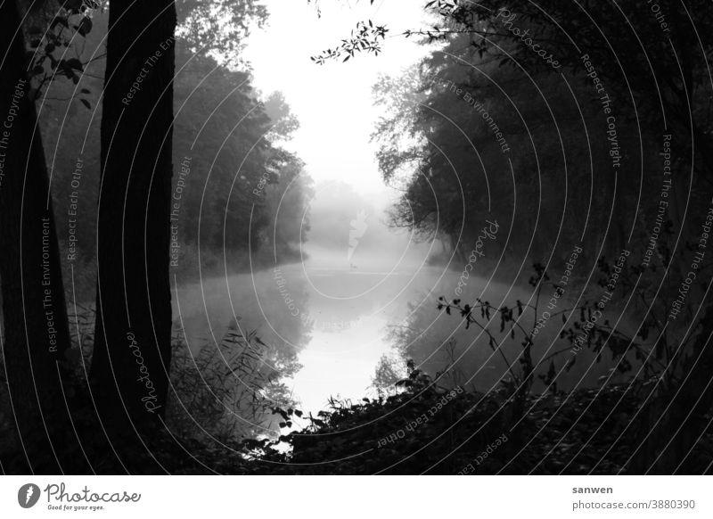 Anglersee See angeln Nebel Schwäne Schwan Tiere Wasser Natur Vogel Landschaft düster Morgen Morgenluft Morgennebel Menschenleer