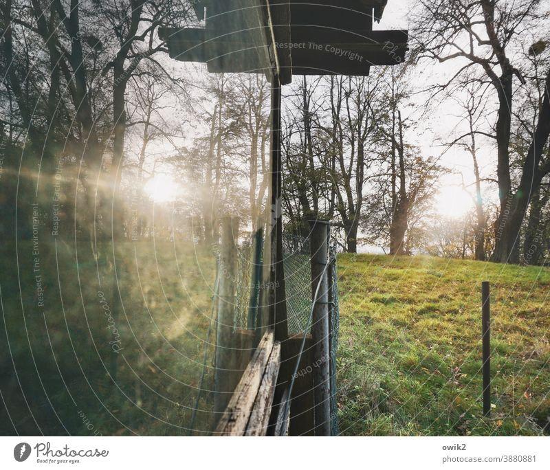 Wird spät Häuschen Fenster Garten Schuppen Glas Spiegelung Bäume Wiese Gras Sonne Sonnenlicht Abend Zaunpfahl Natur Farbfoto Reflexion & Spiegelung