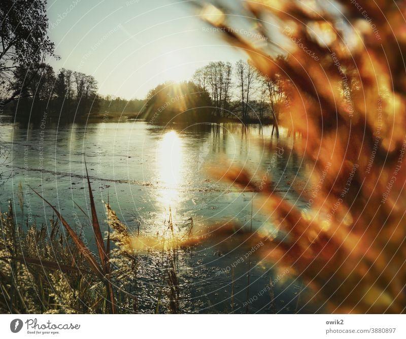 Erstarrt Seeufer Insel Teich leuchten ruhig Sehnsucht Einsamkeit Idylle Horizont Schönes Wetter Wolkenloser Himmel Wasser Luft Pflanze Landschaft Umwelt