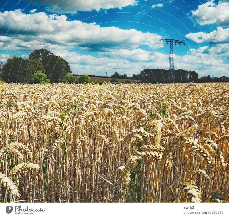 Ährenamtlich Umwelt Natur Landschaft Himmel Wolken Schönes Wetter Klima Sommer Horizont Wärme Pflanze Baum Feld warten Getreidefeld Kornfeld Idylle Ferne