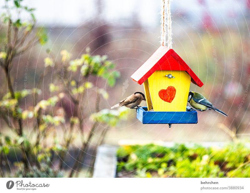 ein herz für vögel Vogelhäuschen Vögel Meisen Kleiber füttern Fressen Garten Sträucher Herbst Winter Jahreszeiten hübsch niedlich Herz Tierliebe Außenaufnahme