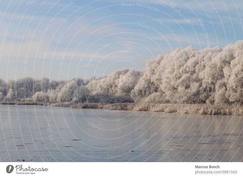 Donaualtwasser im Winter Altwasser Eisflaeche Gewaesser Kaelte Raureif Ufer blauer Himmel eis gefroren kalt rauhreif schnee see weiss winter Schnee Frost weiß