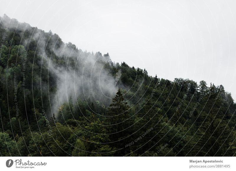 Nebel in den Bergen am frühen Morgen Abenteuer Atmosphäre Herbst Hintergrund schön Cloud wolkig kalt cool dunkel Morgendämmerung dramatisch Umwelt Immergrün