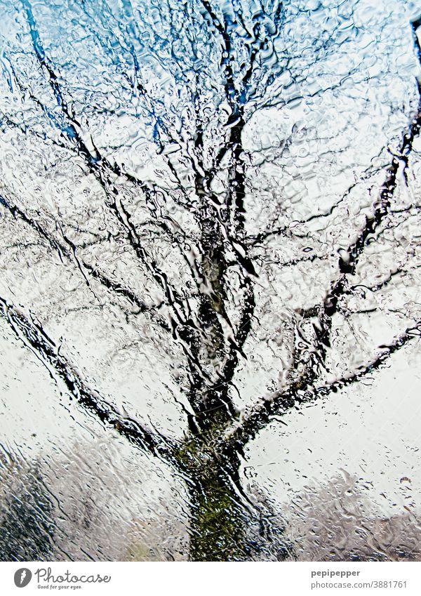 Baum im Regen von innen durch eine Autoscheibe fotografiert Scheibe Autofenster Fensterscheibe Wassertropfen Wetter Tropfen nass schlechtes Wetter Menschenleer