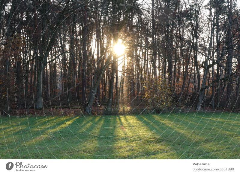 Waldrand im Gegenlicht Bäume baum baumreihe landschaft natur sonne sonnenstrahl sonnenstrahlen waldrand wiese