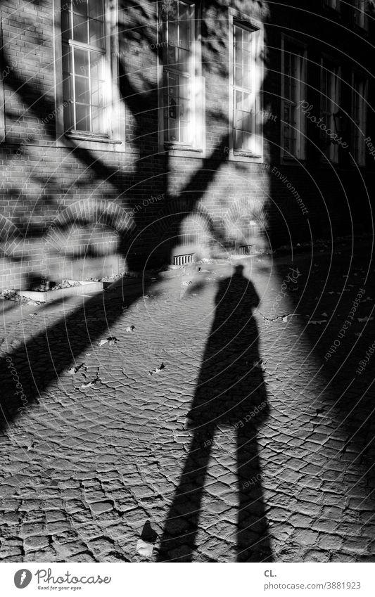 lange schatten Mann Identität anonym Schatten Baum Kopfsteinpflaster Silhouette Herbst groß Mensch geheimnisvoll dunkel allein 1 Haus Fenster