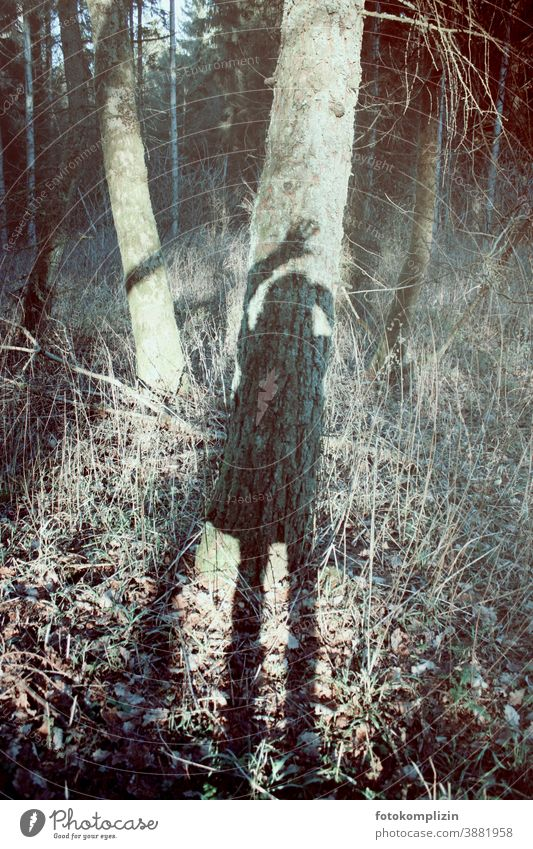 winkender Schattenselfie im Wald Baum Winterlicht kahle Bäume kahler Baum kalte jahreszeit dunkle Jahreszeit Selbstportrait Selbstbildnis winterliche Ruhe