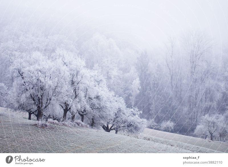 neblige Winterwunderwelt, gefrorenes Feld mit Bäumen gefrorene Landschaft Winterwunderland Winterlandschaft Schneefall nebliger Morgen kalt Nebel idyllisch