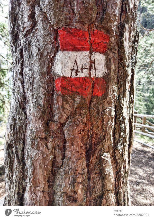 A+M in Wanderzeichen, rot-weiß-rot, eingeritzt. Borke Hinweisschild wandern mehrfarbig Wege & Pfade Wegweisend Hilfe alt Rinde Baum Farbfoto Natur Kontrast