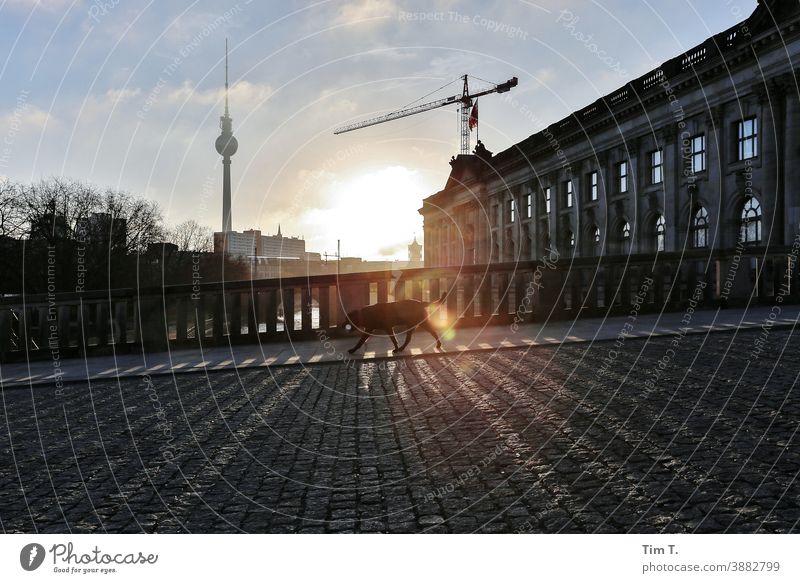 ein Hund läuft über eine Brücke in Berlin Mitte . Die Sonne geht gerade auf. Sonnenaufgang Berlin-Mitte Fernsehturm Himmel Hauptstadt Sehenswürdigkeit