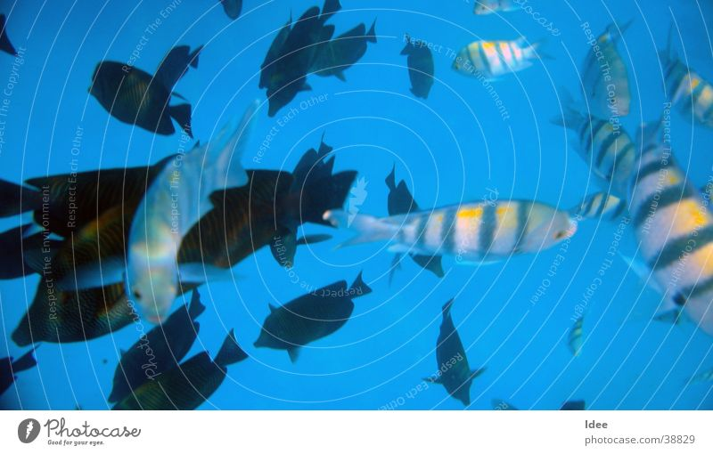 Blubber Wasser Verkehr Fisch tauchen Schnorcheln