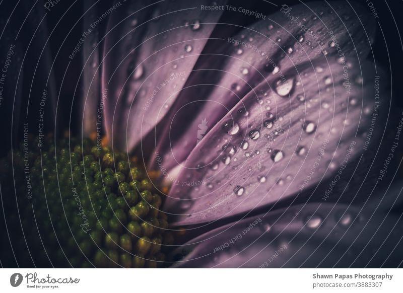 Makroviolette Blume purpur Blumen Nahaufnahme Natur Farbfoto Pflanze Makroaufnahme Blühend Garten