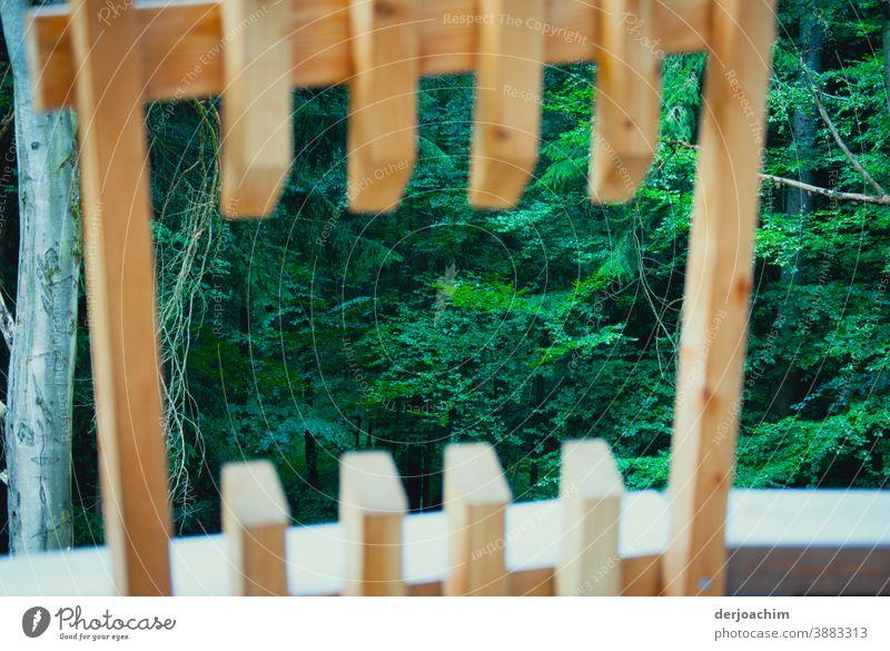 Ein außergewöhnlicher Ausblick auf den Wald. Ein ausgesägter Mittiger Lattenzaun mit wunderschönen Blick, von einer Aussichts Platform auf den Grünen Wald.