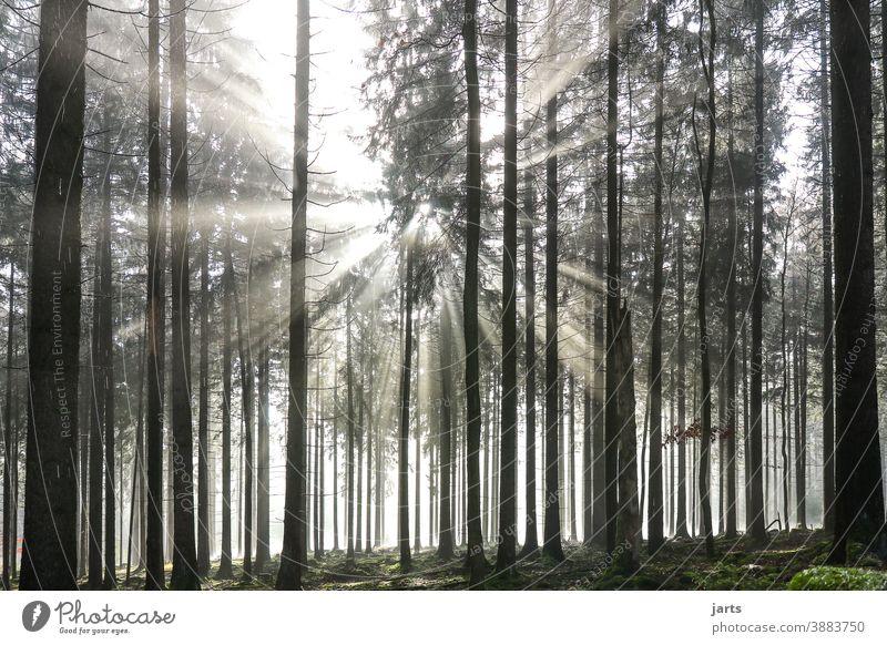 Licht im Wald Sonne Sonnenaufgang Sonnenstrahlen Bäume Nebel Morgen Baum Landschaft Natur Sonnenlicht Außenaufnahme Farbfoto Gegenlicht Umwelt Menschenleer