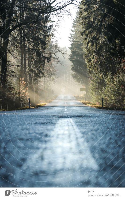 road Straße Asphalt Wege & Pfade Ziel Wald Spessart Licht Lichterscheinung Sonne Sonnestrahlen Nebel Fernweh Baum Außenaufnahme Natur Landschaft Menschenleer
