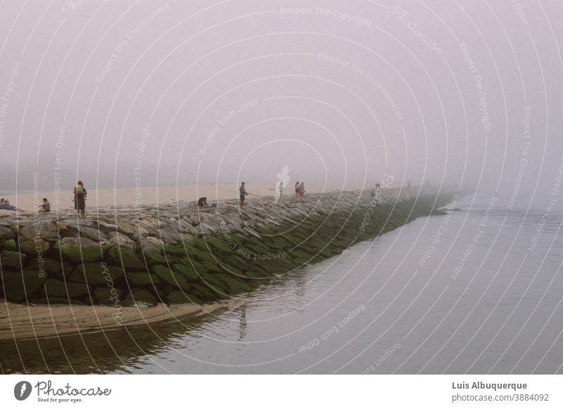Landschaft Strand Natur Ebbe Flut Sand Wasser Küste Meer Ferne nass Klimawandel Küstenschutz Küstenlinie Wellen Umwelt