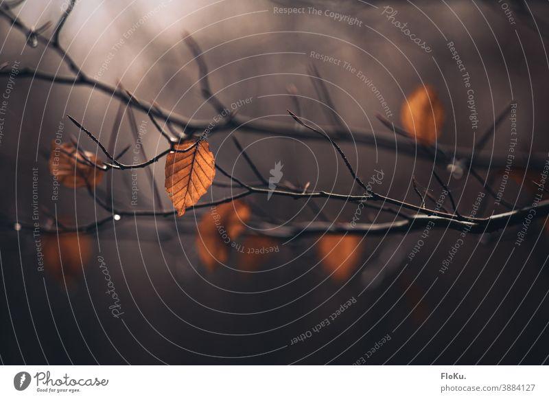 Wenige Blätter Herbstlaub hängen an einem Zweig Schwache Tiefenschärfe Tag herbstlich Herbstfärbung Zweige u. Äste Außenaufnahme Farbfoto Pflanze gelb Natur