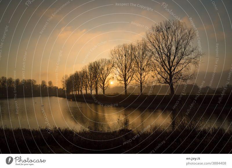 Herbst Nebel am Rhein zum Sonnenuntergang mit einer Reihe Bäumen, die sich in einem See spiegeln Baumreihe Allee Spiegelung Abend Orange Himmel Wolken Wasser