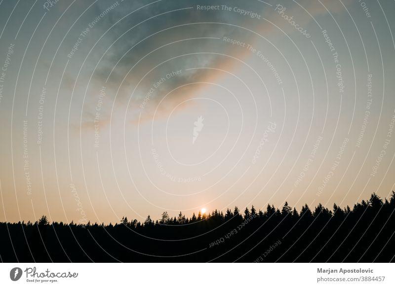 Wunderschöner Sonnenuntergang über dem Kiefernwald Abenteuer Air Hintergrund blau Windstille Cloud Morgendämmerung dramatisch Abenddämmerung Immergrün erkunden
