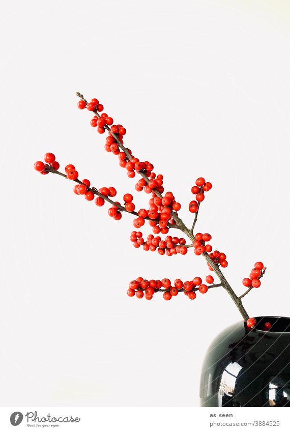 Ilex Zweig rot schwarz glänzend Beeren Dekoration Floristik japan japanisch minimalistisch Textfreiraum links Dekoration & Verzierung Pflanze Farbfoto Natur