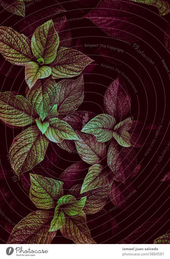 grüne und rote Pflanzenblätter im Herbstsaisonm, Herbstfarben Blätter Blatt Garten geblümt Natur natürlich Laubwerk dekorativ Dekoration & Verzierung abstrakt