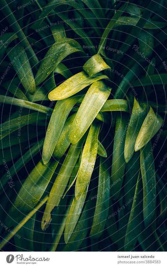 grüne Pflanzenblätter in der Natur, grüner Hintergrund Blätter Blatt Garten geblümt natürlich Laubwerk dekorativ Dekoration & Verzierung abstrakt texturiert