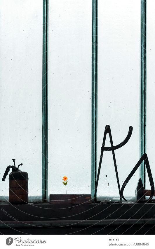 Industrieromantik. Blümchen als Stimmungsaufheller auf der Fensterbank am düsteren Arbeitsplatz Blume Kunstblume Glasfenster industriefenster Ölkanne Hammer