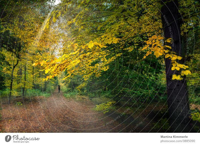 Herbstwald mit einer Person in schwarz mit einem schwarzem Regenschirm Wald Ast Laub farbenfroh Flora Gras Landschaft Blatt Blätter Dunst natürlich im Freien