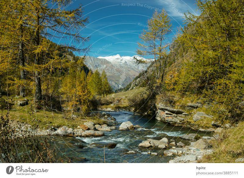 ...und nochmal Herbst im Hochgebirge Bach Berge Bergwald Berge u. Gebirge Natur Farbfoto Wald Alpen Wasser Schönes Wetter wandern