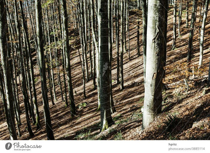 ..und nochmal Herbst im Mittelgebirge Baum Bäume Wald Natur Herbstlaub Außenaufnahme Sonnenlicht Herbstfärbung Herbstwald herbstlich