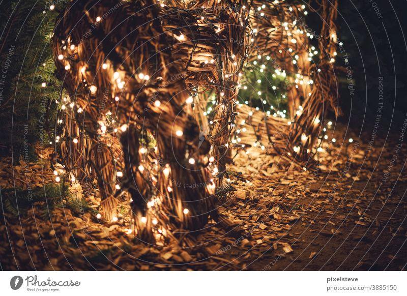 Weihnachtsbeleuchtung Weihnachten Weihnachtsdekoration weihnachtlich Advent Weihnachten & Advent Christbaum Weihnachtsbaum Tanne Tannenbaum Dekoration Winter