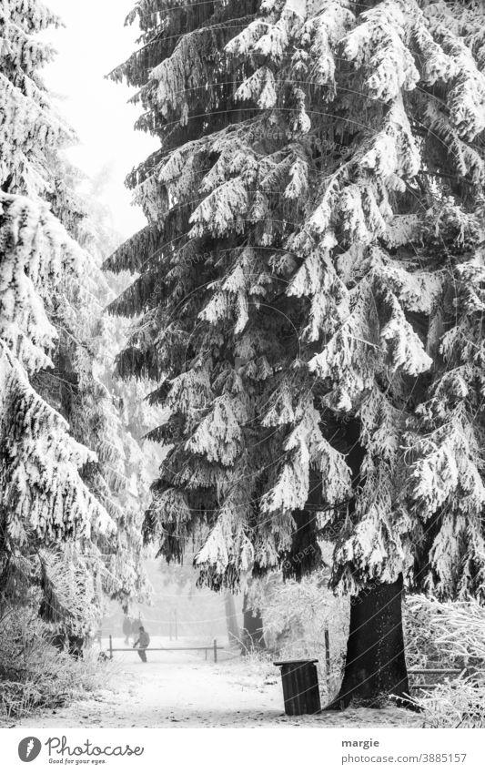 Tief verschneiter Wald, eine riesige Tanne, Fichte an einem abgesperrten Weg Schnee Winter Baum Eis frieren Eiszeit kalt einzigartig Pflanze Schneefall Frost
