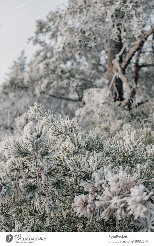 #A0# Wandern in der Sächsischen Schweiz zum Wintereinbruch Sächsische Schweiz wandern Wanderer Wanderung Winterurlaub Winterstimmung Wintertag Winterwald