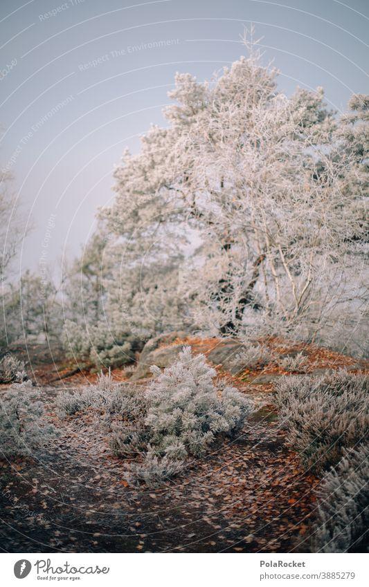 #A0# Wandern in der Sächsischen Schweiz zum Wintereinbruch frieren Landschaft Dezember Wetter Umwelt Klima Schnee Frost kalt Natur Kälte winterlich Winterlicht
