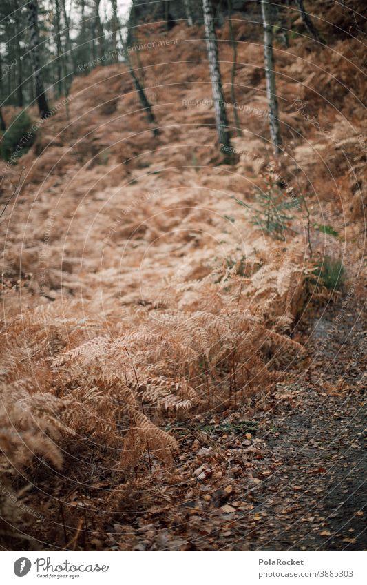 #A0# Herbstspaziergang durch den Wald herbstlich Herbstlaub Herbstfärbung Herbstbeginn Herbstwald Herbstlandschaft Herbststimmung Pfad