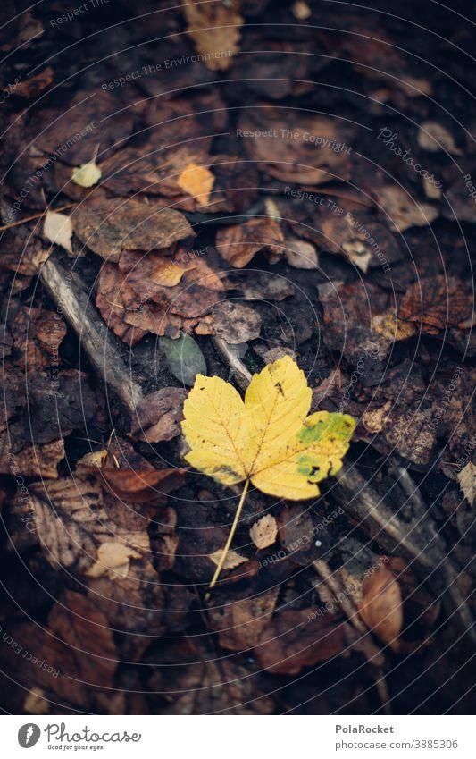 #A0# Gelbes Herbstblatt herbstlich Herbstlaub Herbstfärbung Herbstbeginn Herbstwald Herbstwetter Herbstlandschaft Herbststimmung gelb Blatt
