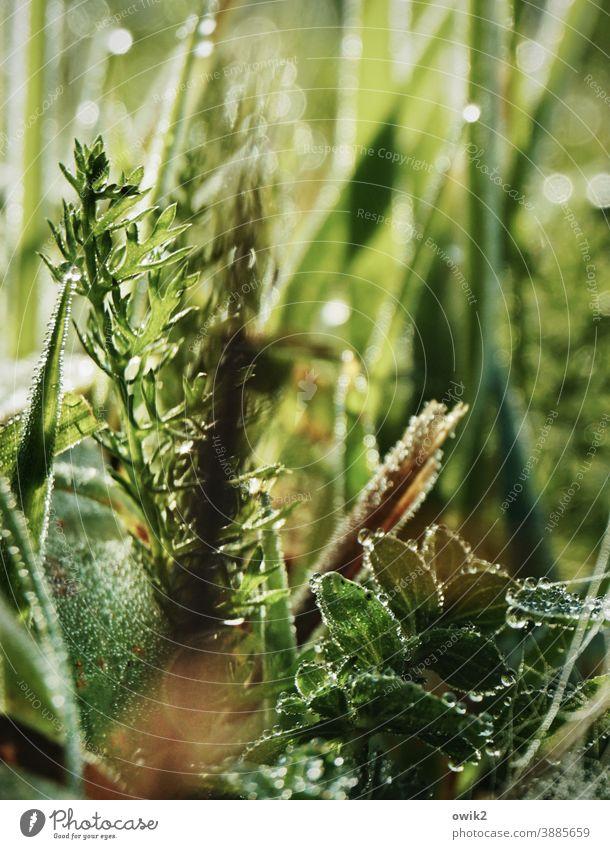 Gefilde Grashalme Unschärfe grün Nahaufnahme Natur Umwelt frisch Pflanze Schwache Tiefenschärfe Makroaufnahme Froschperspektive Menschenleer Detailaufnahme