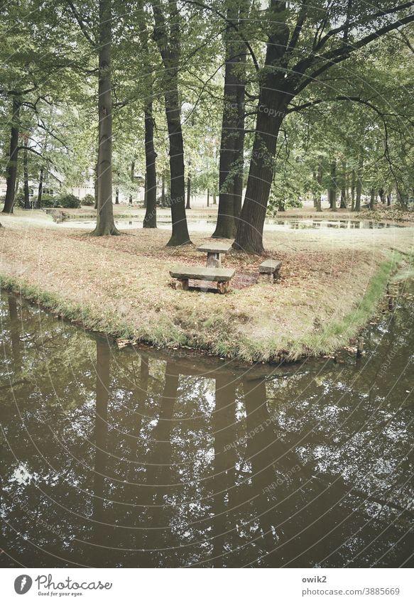 Parkbucht Bäume Wasser Pflanzen Außenaufnahme Farbfoto Menschenleer Wald grün Idylle Baum Natur Reflexion & Spiegelung Landschaft See Tag Himmel ruhig Teich