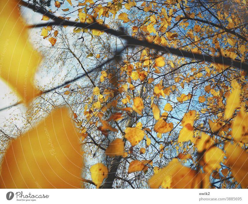 Herbstliche Tupfer Umwelt Natur Pflanze Blatt Außenaufnahme Farbfoto Wandel & Veränderung Menschenleer Textfreiraum unten Sonnenlicht Wolkenloser Himmel blau