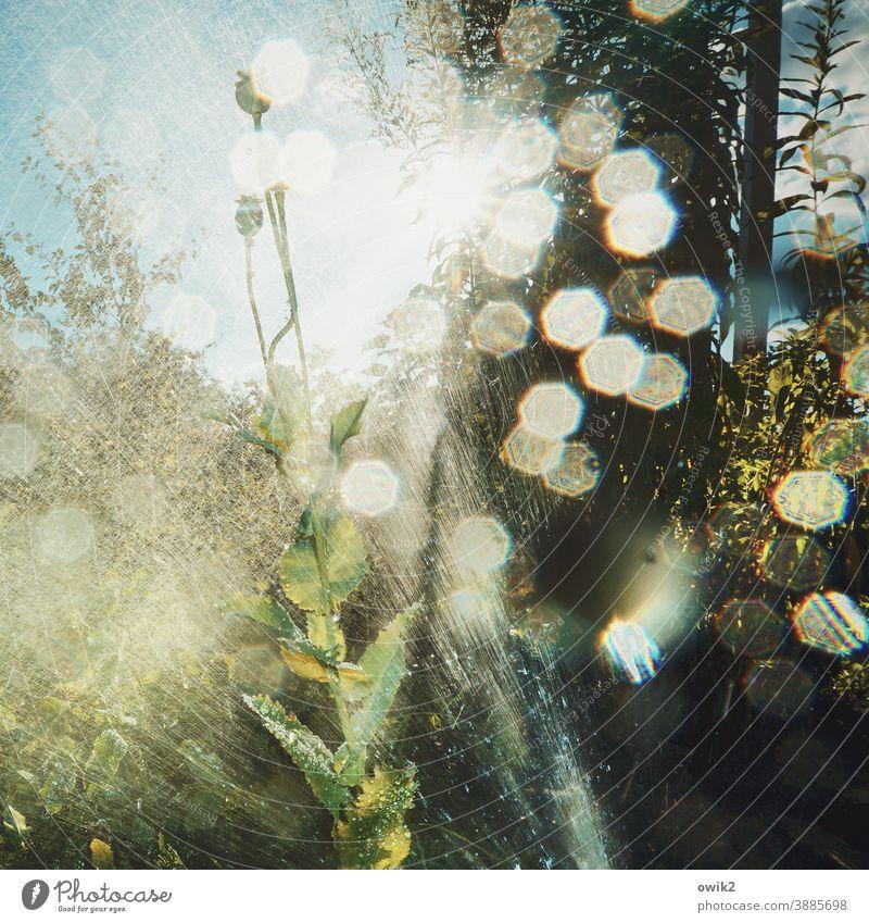 Sommerdusche Garten Regen Dusche Wasser nass Pflanze Wachstum gießen Wassertropfen Natur Außenaufnahme feucht Sonnenlicht Makroaufnahme Nahaufnahme