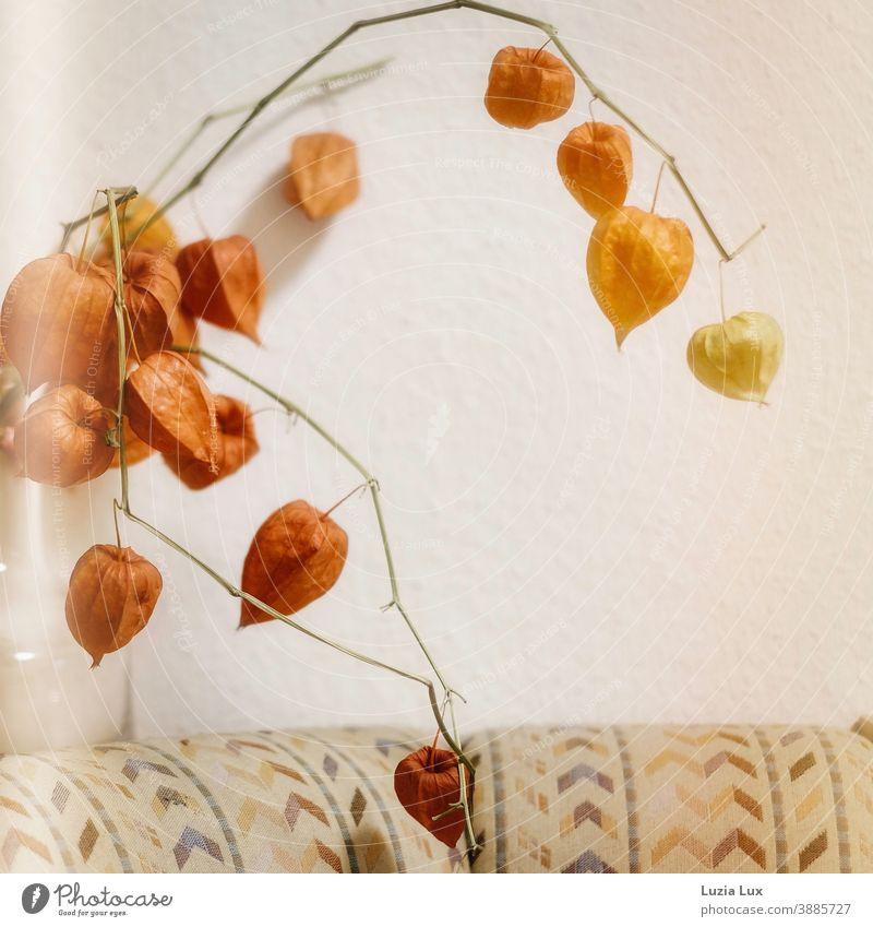 Herbstliches Stillleben: Lampionblumen in einer Glasvase, über einer Sitzecke mit altmodischem Bezug Vase herbstlich häuslich orange leuchtend