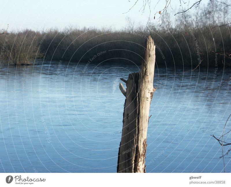 Baumstamm im Moor Wasser See Baumstamm Moor