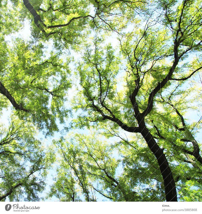 systemrelevant | gesunde Bäume baum blätterdach ast äste bäume baumkrone blau grün frühling schwungvoll natür ökologie umwelt frisch inspiration wohlfühlen