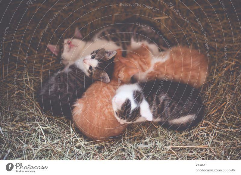 We are family (II) Tier Haustier Katze Tiergesicht Fell Tiergruppe Tierjunges Tierfamilie Stroh liegen schlafen klein Neugier niedlich Vertrauen Sicherheit