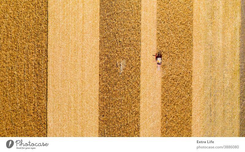 Ansicht von oben auf Mähdrescher, Erntemaschine, erntereifen Mais landwirtschaftlich Ackerbau Agronomie Müsli Kornfeld Land kultiviert Bodenbearbeitung